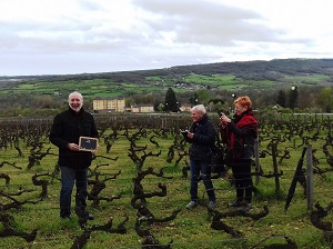 Adopt-a-vine experience in Burgundy, France