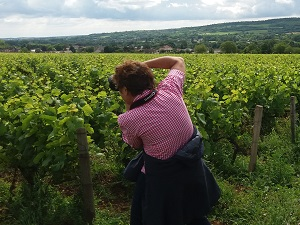 Adopt-a-vine experience in Burgundy at Domaine Chapelle