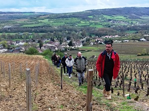 Vineyard and winery visit in Santenay, Burgundy