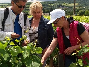 Wine-making courses in the vineyard with the winemaker