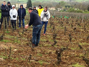 Oenology course at an organic winery in France