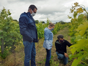 Adopt an organic vine and follow how to make wine in Loire Valley