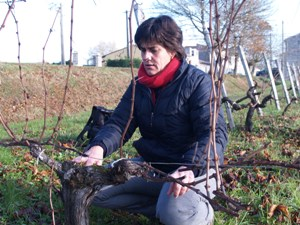 Pruning the Vines at Château Beau Rivage