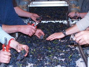 Sorting the good from bad grapes