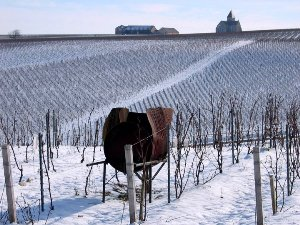 Domaine Jean-Marc Brocard Vineyard Chablis under the snow