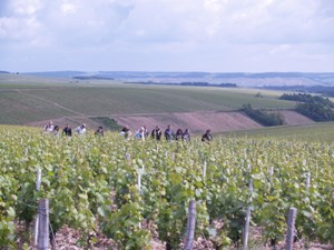 Walking in the Cbalis Vineyards