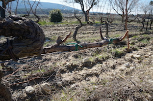vine winter work Rhone Valley