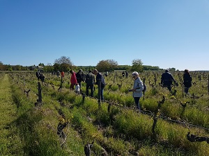 Meeting the adopted vines in the vineyard
