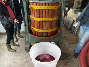 Wine making gift in Bordeaux. Harvest the grapes and follow their journey to the chai