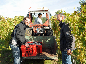 Adopt-a-Vine Gift in Chinon, Loire Valley, France and get invovled in the harvest