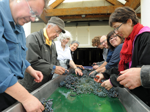 Wine making gift in France. Renat-a-vine and get involved in making your own wine