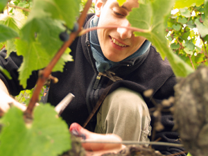 Visit your organic adopted vines for an unforgettable experience