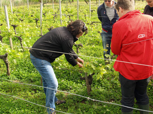 Wine Experience Gift. Adopt a vine in Bordeaux, France, and follow the making of your own wine.