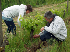 Original gift idea for a wine lover. Adopt your own plot of vines and get involved in making your own wine.