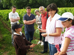 Adopt a vine gift in Bordeaux to learn how to be a winemaker