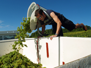 adopt a vine in France and get involved in the harvest