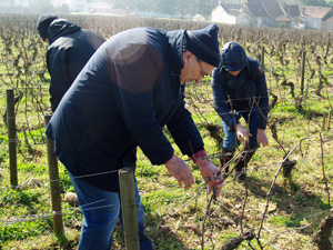 Pruning expereince Santenay Domaine Chapelle