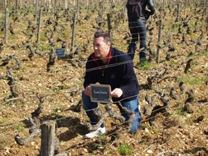 Rent-a-vine gift in a French vineyard