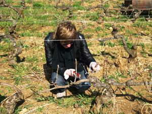 Original Wine Enthusiast Gift. Hands-on wine course in a French vineyard.