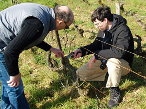 Vine pruning workshop Burgundy