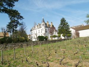 Wine Experience Gift. Rent-a-vine and vineyard visit in Burgundy, France