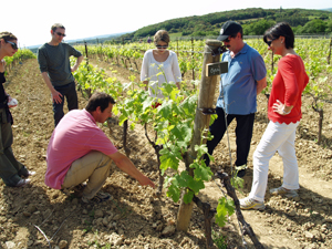 Learning about the terroir and grape varieties in the organic vineyard