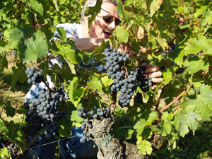 Harvest experience in the Loire Valley