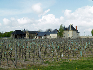 Wine Experience Gift in France. Rent-a-vine in an organic vineyard in Chinon.