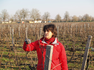 Christine explains pruning the vines in Bordeaux during the Wine Experience day in Bordeaux