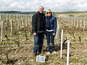 vine adoption Burgundy Chablis