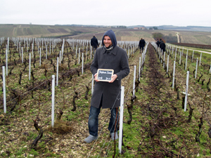 Adopt-a-vine wine gift experience Chablis, France. Adopt a row of vines.
