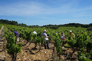French wine making course in the Rhône Valley