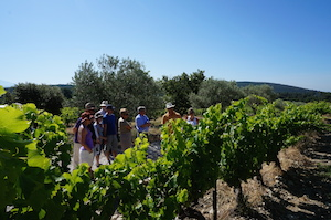 Wine making course in the Rhone Valley