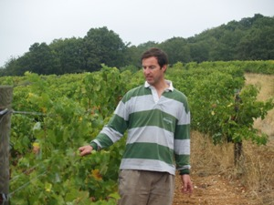 In the vineyard at domaine Allegria