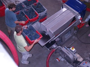 Emptying the grapes into the egrappeur