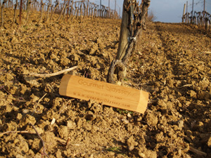 Wine Experience Gift for wine enthusiasts. Adopt your own vines in an organic vineyard