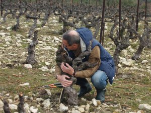 Adopt-a-Vine gift in France. Follow the making of your own wine in the Cotes du Rhone.