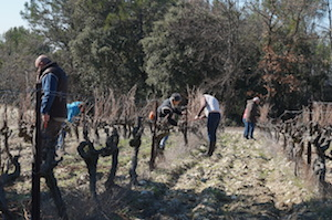 Pruning the vines