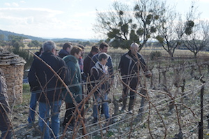 Vineyard tour at Domaine la Cabotte France