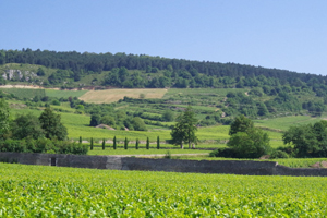 Wine Experience Gift. Rent-a-vine in Burgundy and get involved in working in the vineyard