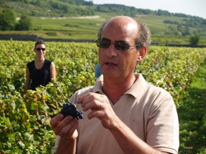 Assessing the quality of the grapes
