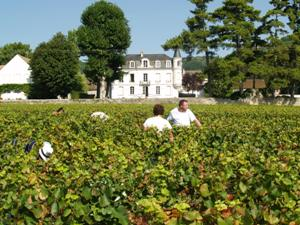 Harvest Experience Day at Domaine Chapelle in Burgundy France