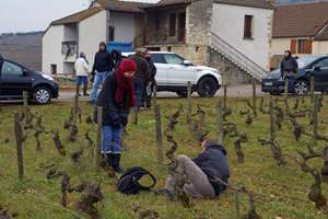 Adopt-a-vine gift in France. Organic vineyard visit in Burgundy.