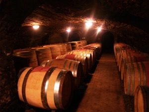 Visit of the cellars