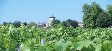 Gourmet Odyssey Wine Experience Day in Bordeaux