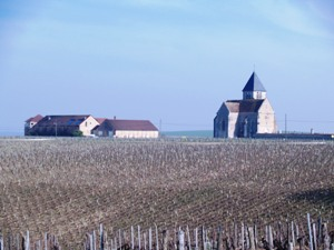 In the Middle of the Chablis vineyards for the Wine Dicovery Experience Day