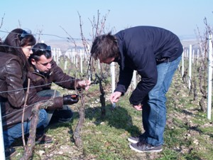 Learning how to prune the vines