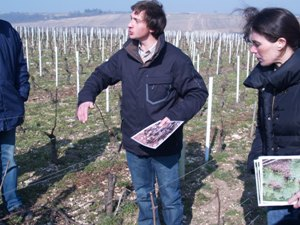 Explanation of biodynamic wine making