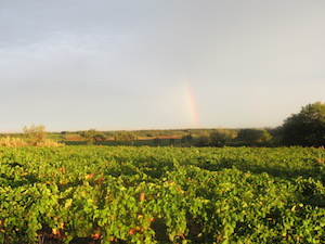Vineyard experience in Languedoc