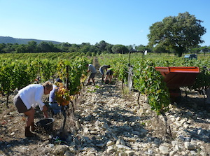 adopt a vine gift in the Cotes du Rhone, France